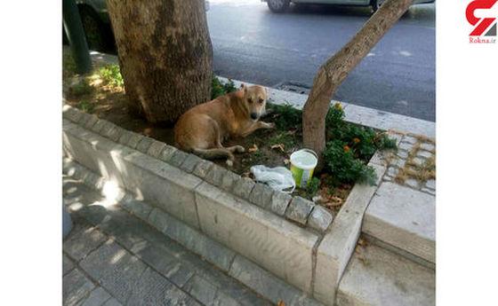 فرار دردناک یک سگ از وانت مرد مرموز در مرکز تهران +تصاویر