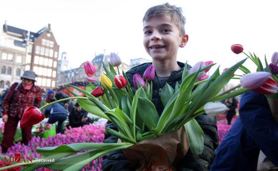 تصاویر: روز ملی گل لاله در هلند